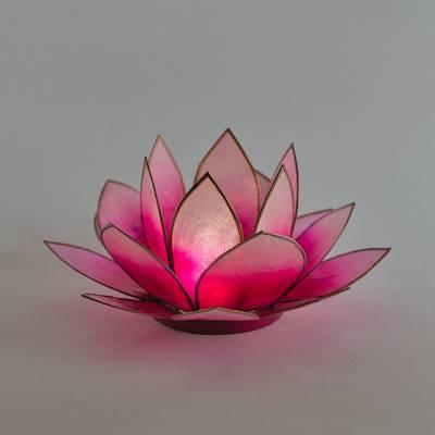 Lotosblüte Lotoslicht Nr.5 pink, Erfolg - 1